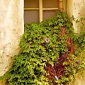 Overgrown Window Of Old Building by Yali Shi