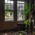 Overgrowth by Rick Kuperberg Sr