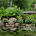 Overlooking The Lily Pond by Pat Lucas