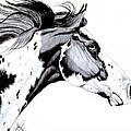 Overo Paint Horse by Cheryl Poland