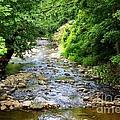 Owens Creek by Patti Whitten