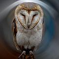 Owl Alba  Spain  by Colette V Hera  Guggenheim