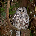 OWL by David Gleeson