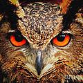 Owl Eyes by Safran Fine Art