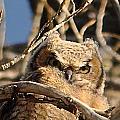 Owl Eyes by Susan Chesnut