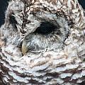 Owl by Gaurav Singh