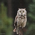 Owl In The Forest Visits by Tom Janca