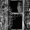 Owl In The Window by Angie Vogel