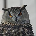 Owl by Jeff Wright