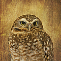 Owl by Kim Hojnacki
