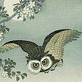 Owl - Moon - Cherry Blossoms by Pg Reproductions