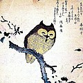 Owl On Tree Branch by Pg Reproductions