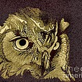 Owl by Owen G Maidstone