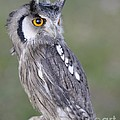 Owl by Jenny Potter