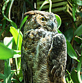 Owl Portrait 2 by Aimee L Maher ALM GALLERY