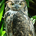 Owl Portrait by Aimee L Maher ALM GALLERY