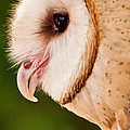 Owl Profile by Don Johnson