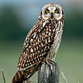 Owl See You by Torbjorn Swenelius