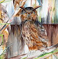 Owl Series - Owl 2 by Judith Rice