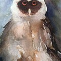 Owl by Sherry Harradence