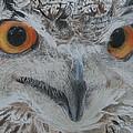 Owl by Stephen W Keller