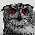 Owl by TouTouke A Y