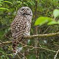 Up - Owl by Rod Wiens