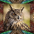 Owl With Collage Border by Janis Knight