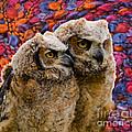 Owlets In Color by Les Palenik