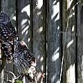 Owls by Linda Kerkau