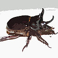 Ox Beetle Abstract by George Pedro