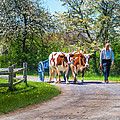 Ox Cart And Farmer II by Chris Bordeleau
