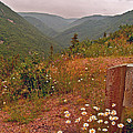 Ox-eye Daisies On Skyline Trail In Cape Breton Highlands Np-ns by Ruth Hager