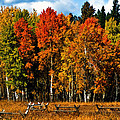Oxbow Autumn by Brian Kerls