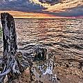 Oyster Bay Stump Sunset by Michael Thomas