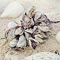 Oysters by Amanda Dunlap
