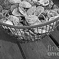Oysters by Nancy Patterson