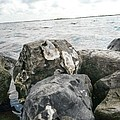 Oysters On The Rocks by John  Duplantis
