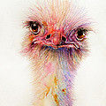 Ozzy The Ostrich by Arti Chauhan