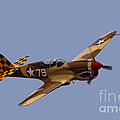 P-40 by Tommy Anderson