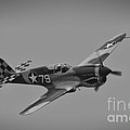 P-40 Warhawk Bw by Tommy Anderson