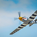 P-51 Mustang Low Pass by Puget  Exposure
