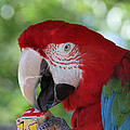 P Is For Parrot by Judy Whitton