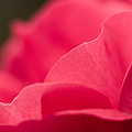 P Is For Pink by Craig Szymanski