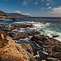 Pacific Coast Life by Mike Reid