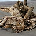 Pacific Driftwood II by Jeanette C Landstrom