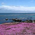 Pacific Grove California by Joyce Dickens