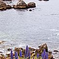 Pacific Grove Coastline by Melinda Ledsome