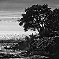 Pacific Ocean by Erika Fawcett