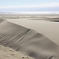 Pacific Ocean Sand Dunes by Athena Mckinzie